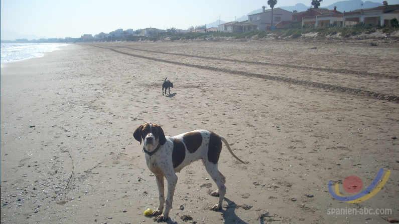 Hundeverbot an allen valencianischen Stränden