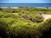 Guardamar del Segura / Costa Blanca / Immobilien und Hauskauf