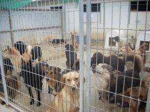 Tierheim in La Manga : Tierheime an der Costa Blanca