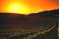 Spanischer Wein 2005 – Das wird ein guter Jahrgang