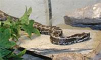 Schlangen an der Costa Blanca – giftige und nicht giftige Schlangen
